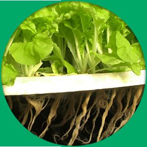 indoor growing hydroponics